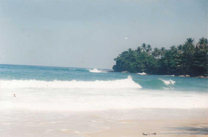Pansea Headland Surf