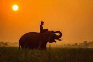 thai-elephant