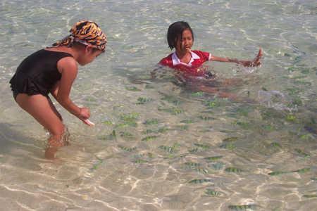 fish-swimming krabi