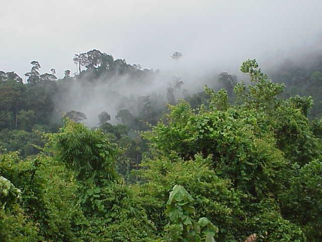misty mountain hop Phang Nga