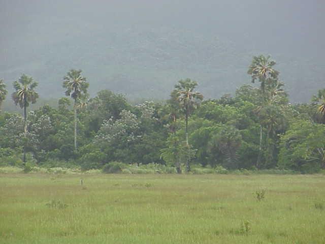 palms takua pa Phang Nga